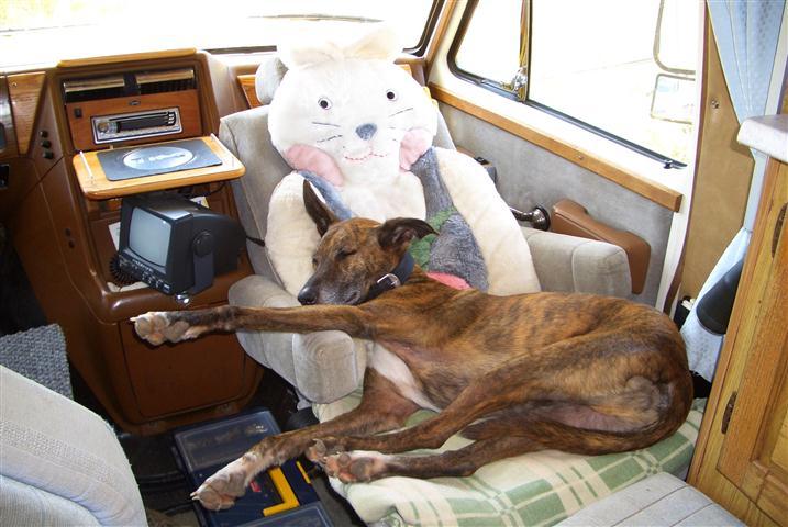 Tiere im Auto (9).jpg