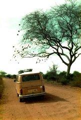 Kenia-Tanzania-95.jpg